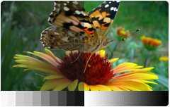 Короткофокусный мультимедийный проектор BenQ MX822ST